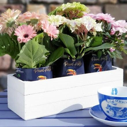 Blumenkasten aus Holz und Kaffeetüten